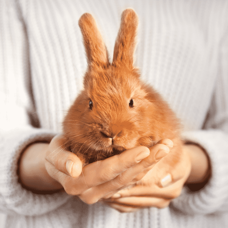 woman holding brown bunny in her hand