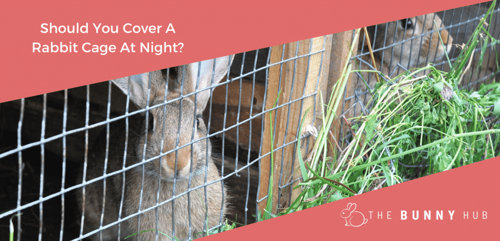 Should You Cover A Rabbit Cage At Night