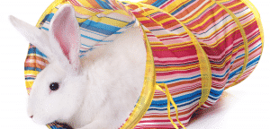 Rabbit in a toy tunnel