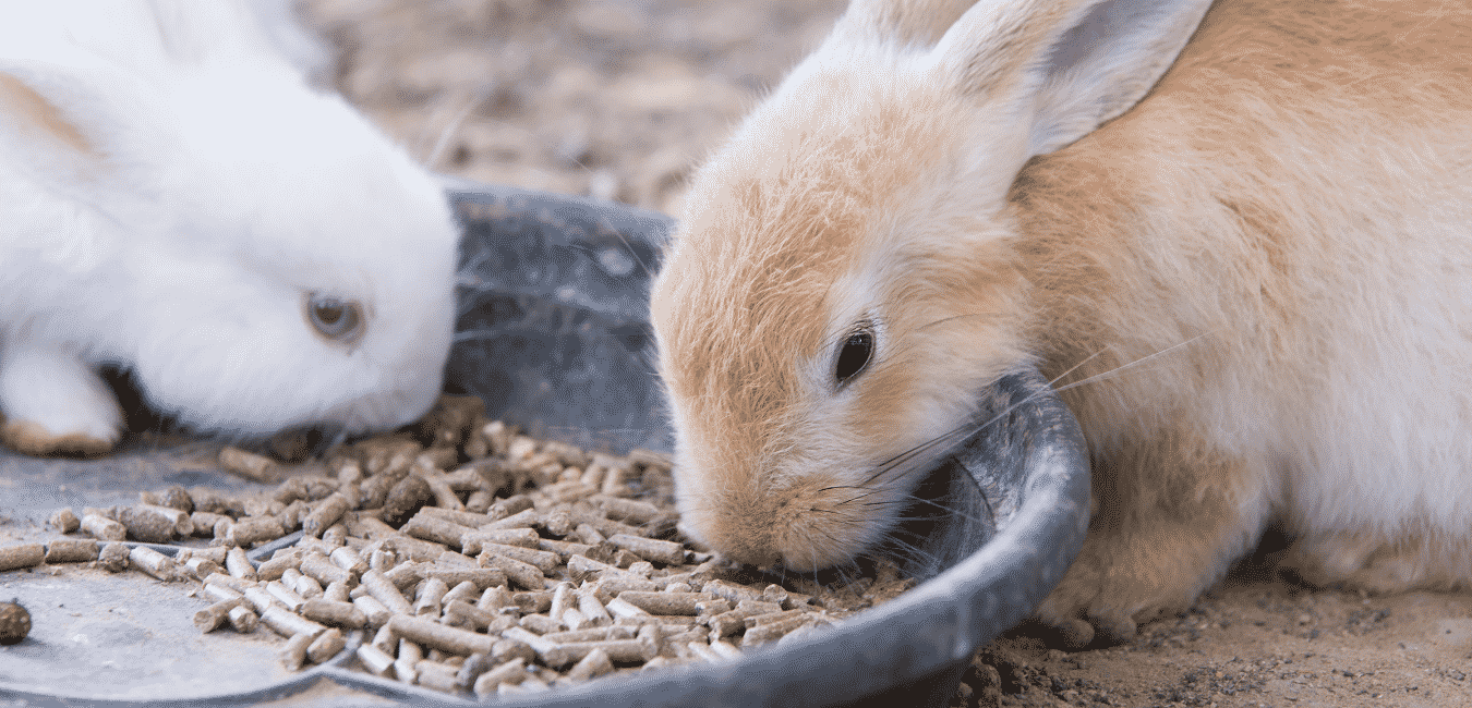 Two Rabbits Eating From A Tray