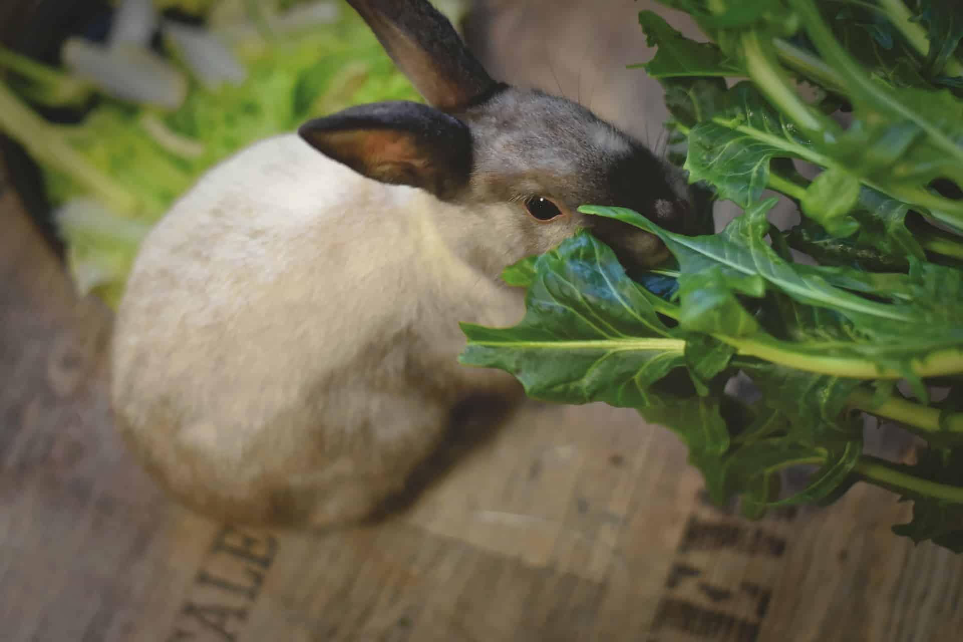 rabbit between the tree