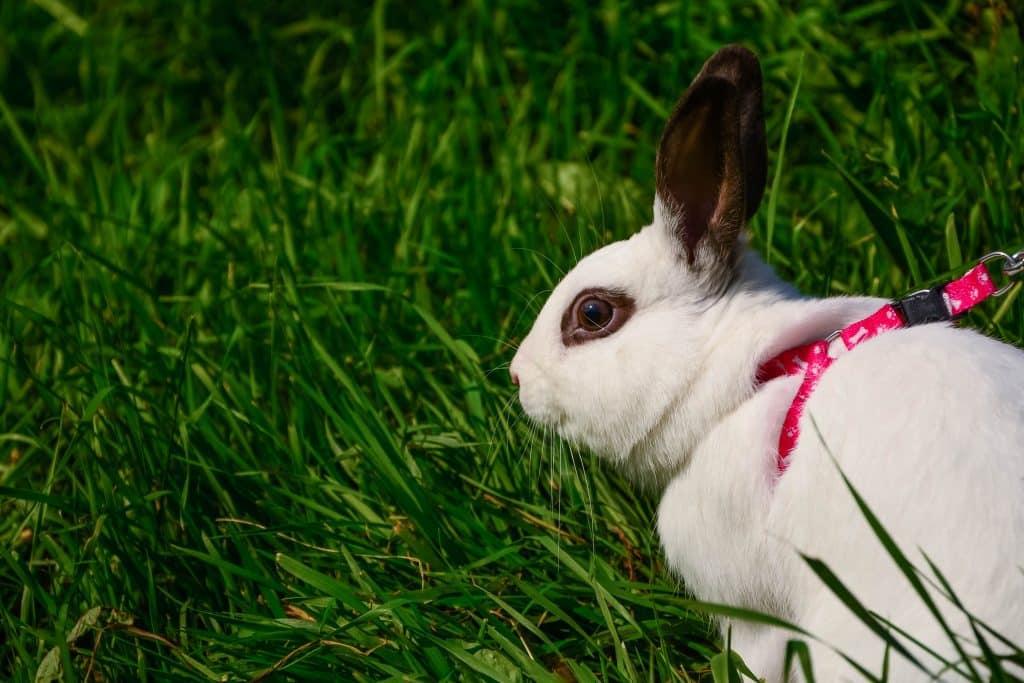 Decorative white rabbit in green grass. Cute pet.