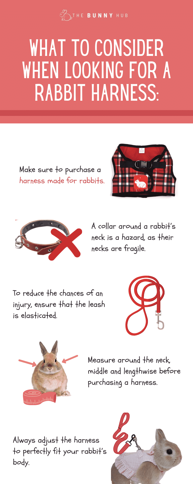 What to consider when looking for a rabbit harness