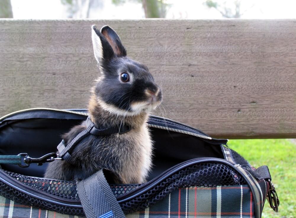 bunny in carrying bag