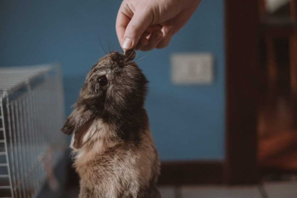 a person feeding a rabbit something to chew on