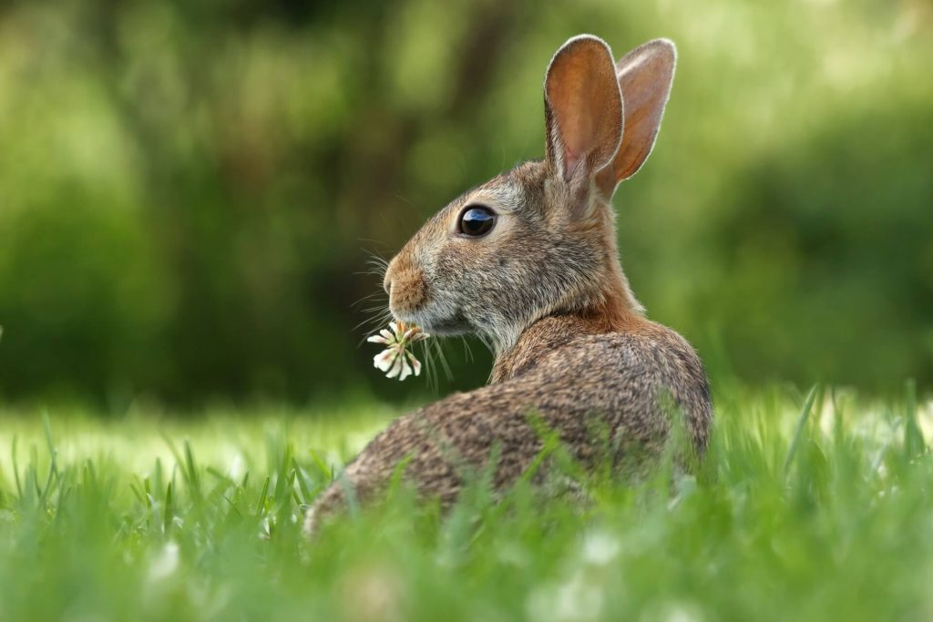 a rabbit holding a flower in its mouth