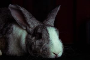 Can rabbits see in the dark