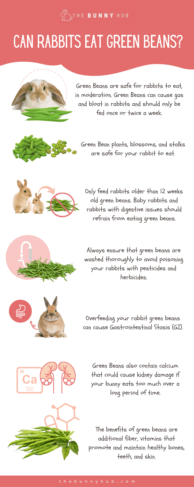 Can Rabbits Eat Green Beans infographic