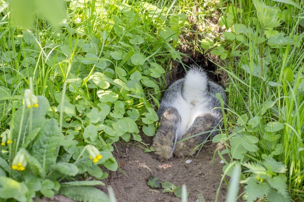 rabbit inside hole