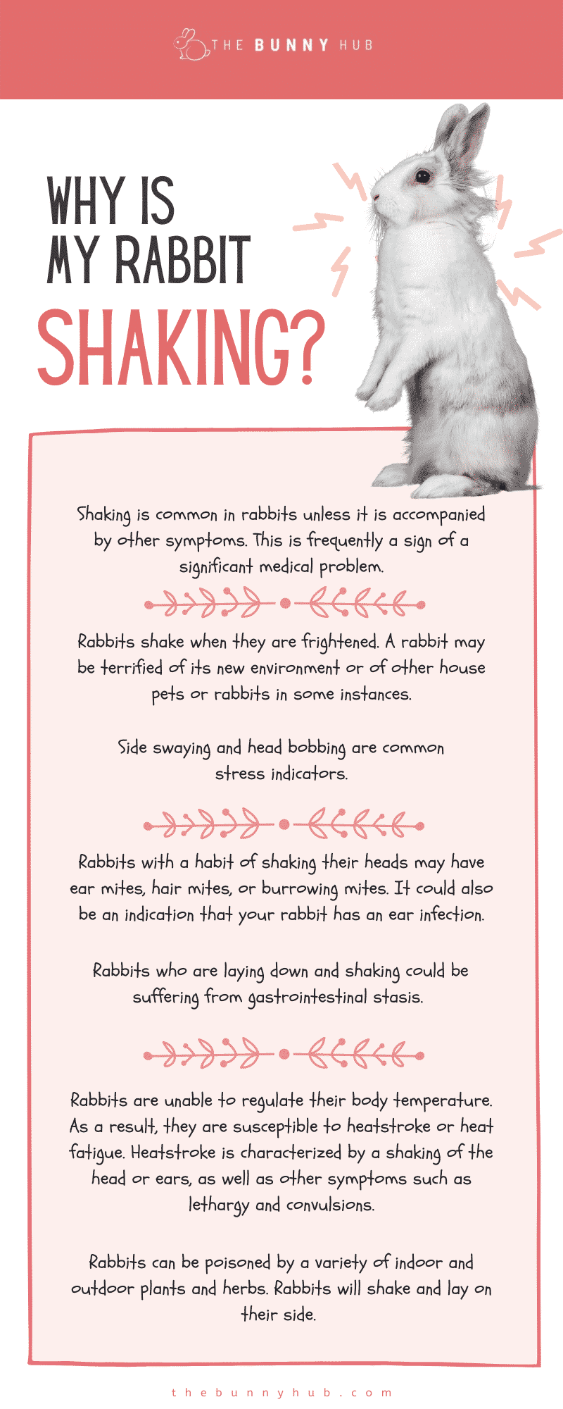 Why is my rabbit shaking infographic