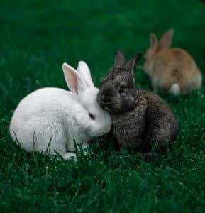 How Do Rabbits Apologize
