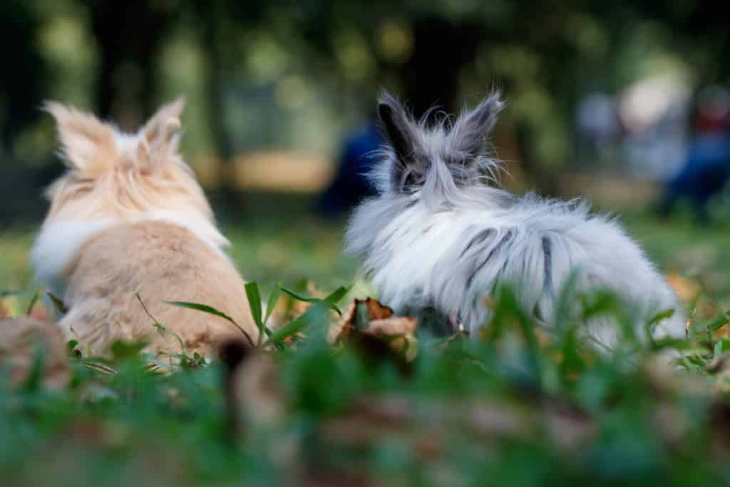 two rabbit on grass