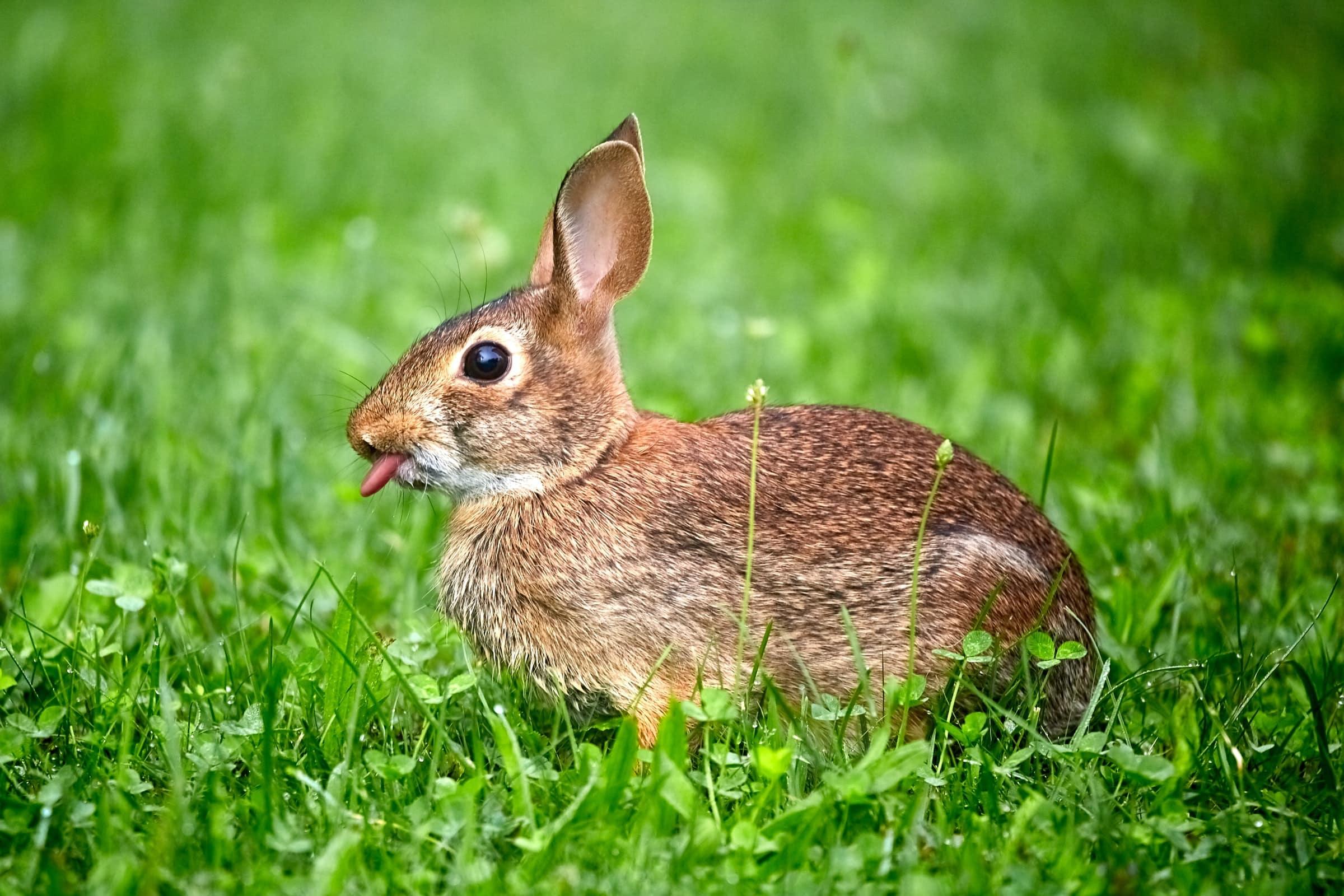 How to Discipline a Rabbit