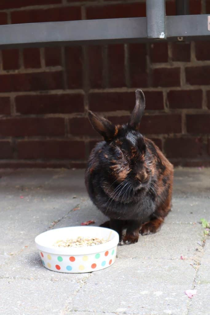 a rabbit with food
