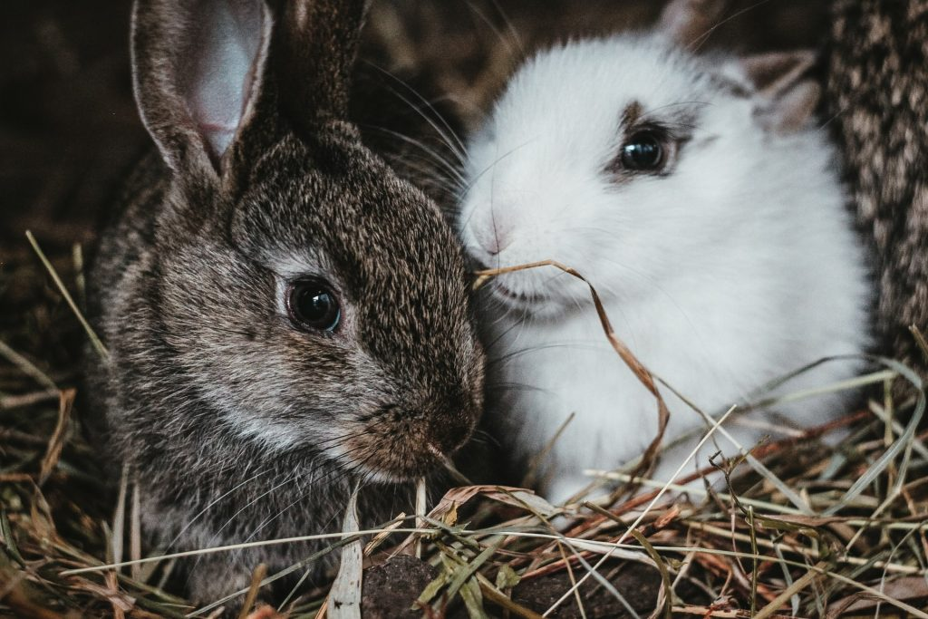 zoom in two rabbits